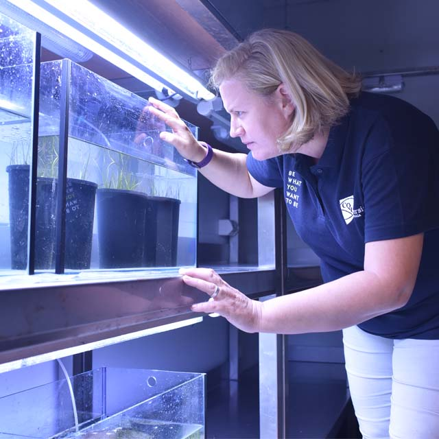 Professor looking at seagrass